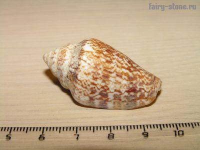 Морская раковина (40мм)
